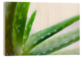 Wood print  Aloe vera plant - Alex Hyde