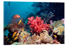 Acrylic print  Coral reef in Thailand - Georgette Douwma