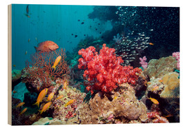 Wood print  Coral reef in Thailand - Georgette Douwma