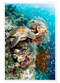Poster  Green turtle - Matthew Oldfield
