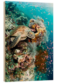 Wood print  Green turtle - Matthew Oldfield