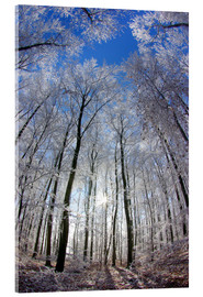 Acrylic print  Sun in the winter forest - Juerg Alean