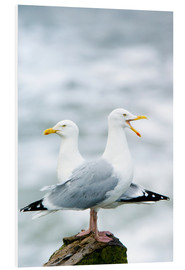Forex  Two Herring Gulls - Duncan Shaw