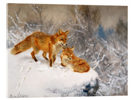 Acrylic print  Two foxes in a winter landscape - Bruno Andreas Liljefors