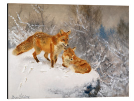 Aluminium print  Two foxes in a winter landscape - Bruno Andreas Liljefors
