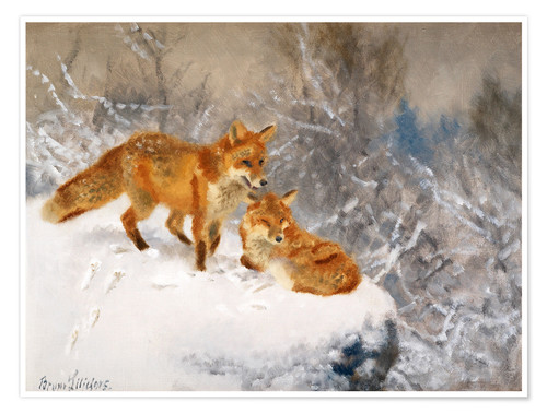 Premium poster Two foxes in a winter landscape