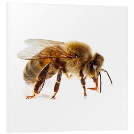 Foam board print  Honey bee