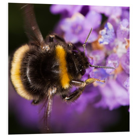 Forex  Bumble bee collecting pollen - Power and Syred