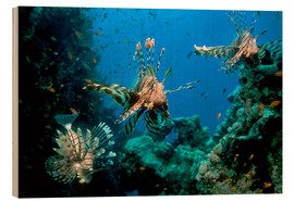 Wood print  Lionfish on a reef - Georgette Douwma