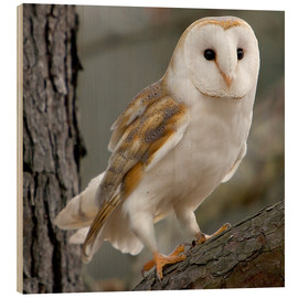 Wood print  Portrait photograph of a Barn Owl - Linda Wright