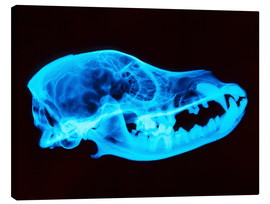 Canvas print  Dog skull X-ray - D. Roberts