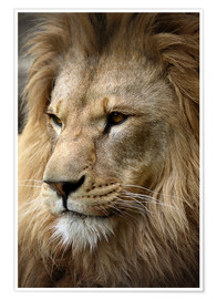 Linda Wright - Lion Portrait