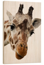 Wood print  Giraffe - Power and Syred