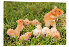 Acrylic glass  Golden hamster with young - PhotoStock-Israel