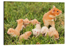 PhotoStock-Israel - Golden hamster with young