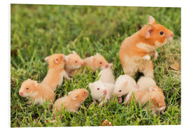 Foam board print  Golden hamster with young - PhotoStock-Israel