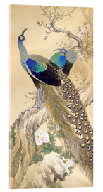 Acrylic print  Two peacocks in spring - Imao Keinen