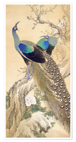 Premium poster Two peacocks in spring
