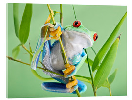 Acrylic print  Red-eyed tree frog - Linda Wright