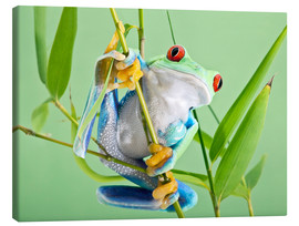 Canvas print  Red-eyed tree frog - Linda Wright