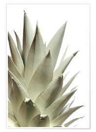 Poster  White pineapple - Neal Grundy