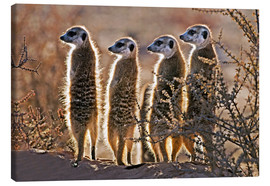 Canvas  Meerkats on guard duty - Tony Camacho