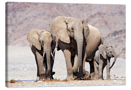Canvas print  African elephants - Tony Camacho