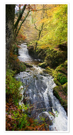 Premium poster  Lynmouth river woodland - Keith Wheeler