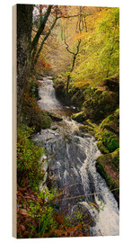 Wood  Lynmouth river woodland - Keith Wheeler