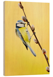 Wood print  Blue tit on pussy willow - Rolfes