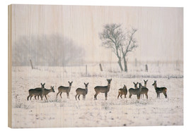 Wood print  Roe deer in winter - Rolfes