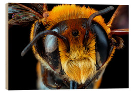Wood print  Male bee head