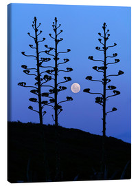 Canvas print  Full Moon and agave trees - Luis Argerich