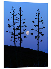 Foam board print  Full Moon and agave trees - Luis Argerich