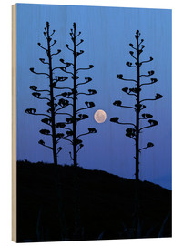 Wood print  Full Moon and agave trees - Luis Argerich