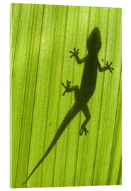 Acrylic print  Silhouette of a gecko on a palm frond - Scubazoo