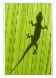 Premium poster  Silhouette of a gecko on a palm frond - Scubazoo