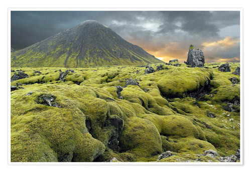 Premium poster Moss-covered lava field, Iceland