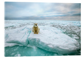 Acrylic print  Polar bear sitting on a ice floe - Peter J. Raymond