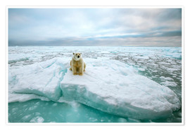 Premium poster  Polar bear sitting on a ice floe - Peter J. Raymond