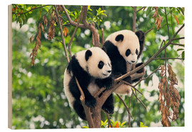 Wood  Young Pandas in a tree - Tony Camacho
