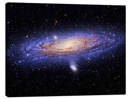 Canvas print  Andromeda galaxy - Tony & Daphne Hallas