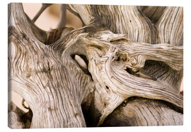 Canvas print  Driftwood - Matthew Oldfield