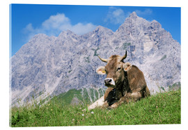 Acrylic print  Cow on a mountain meadow - Bjorn Svensson