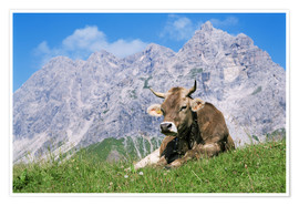 Premium poster  Cow on a mountain meadow - Bjorn Svensson