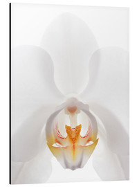 Aluminium print  in the throat of the Orchid - GAVIN KINGCOME