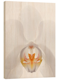 Wood print  in the throat of the Orchid - GAVIN KINGCOME