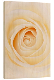 Wood  Rose - GAVIN KINGCOME