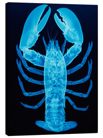 Canvas print  X-ray of lobster - D. Roberts