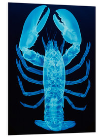 Foam board print  X-ray of lobster - D. Roberts